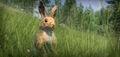New animal eu rabbit