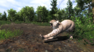 Bobcat pic 2