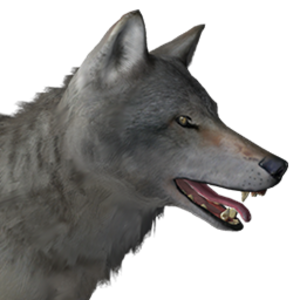 Grey Wolf The Hunter Wikia Fandom