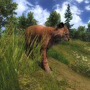 Bobcat pic 3