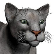 Puma female grey