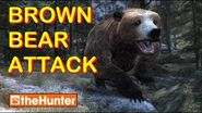 TheHunter Brown Bear Attack and New Hurt Screen