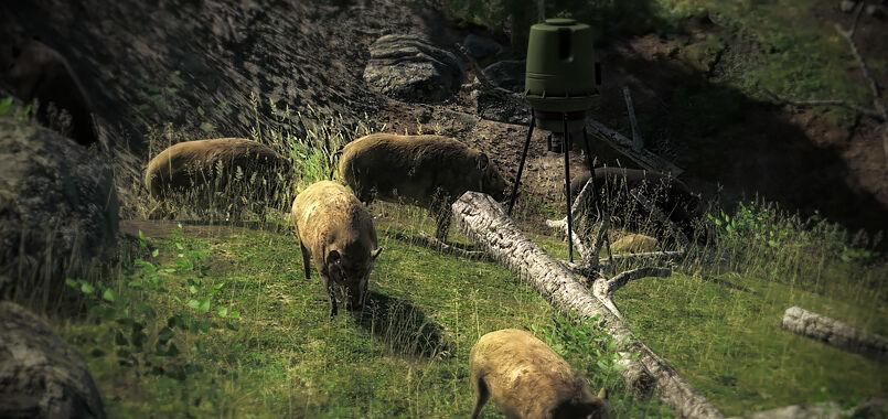 Baited hogs.jpg