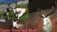 Red deer super rare! Albino 181