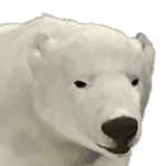 Polar bear male common.png