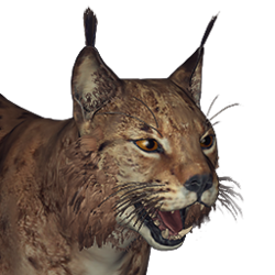 Eurasian lynx male common.png