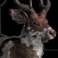 Rusa deer male piebald