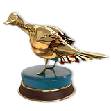 Northern pintail gold