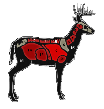 Whitetail Deer The Hunter Wikia Fandom