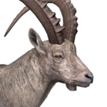 Alpine ibex male common.png