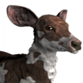 Rusa deer female piebald