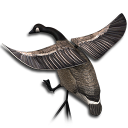 Waterfowling The Hunter Wikia Fandom
