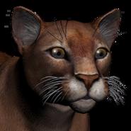 Puma female dark red