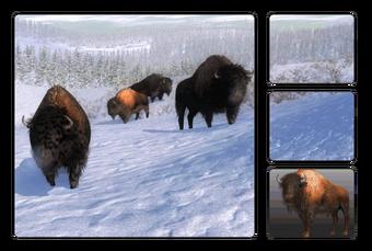 Bison The Hunter Wikia Fandom