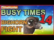 Busy Times 14 - Bighorn Fight - theHunter Classic