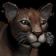 Puma male dark red