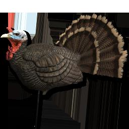 Turkey The Hunter Wikia Fandom