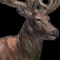 The Hunter Wikia Fandom
