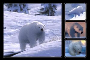 Species polar bear.png