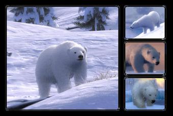 Polar Bear The Hunter Wikia Fandom