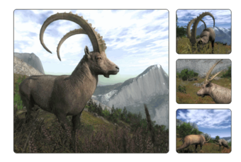 Alpine Ibex The Hunter Wikia Fandom