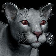 Puma female albino