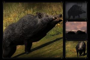 Species wild boar 700.png