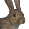 European rabbit male common.png