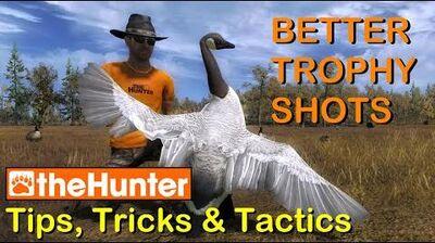 TheHunter_Tips,_Tricks_&_Tactics_-_BETTER_TROPHY_SHOTS