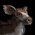 Sambar deer female piebald