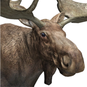 Moose male common.png