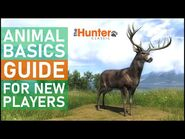 Animal Basic Guide for New Players - theHunter Classic