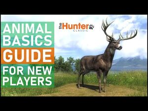 Animal_Basic_Guide_for_New_Players_-_theHunter_Classic