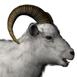 Dall sheep male common.png