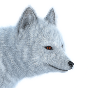 Arctic fox male common.png