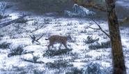 Lynx common1