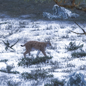 Lynx common1.png