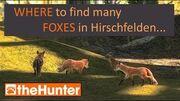 TheHunter_Find_Foxes_in_Hirschfelden