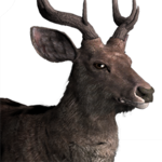 Rusa deer male common.png