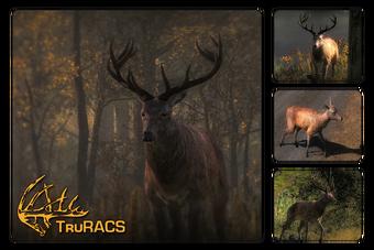 Red Deer The Hunter Wikia Fandom