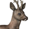 Roe deer male common.png