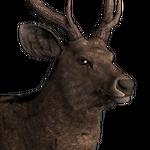 Sambar deer male common.png