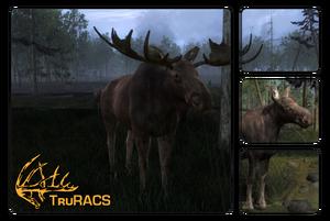 Species moose 700.png