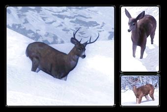 Sitka Deer The Hunter Wikia Fandom