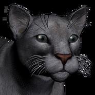 Puma male grey