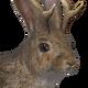 Roe-bit male common