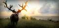 Mule deer NTA release