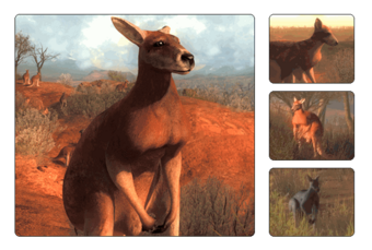 Red Kangaroo The Hunter Wikia Fandom