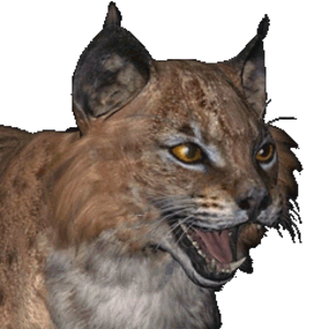 Bobcat male common.png