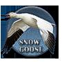 Snow goose badge.png